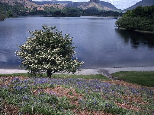 FOOT, GRASMERE LAKE
