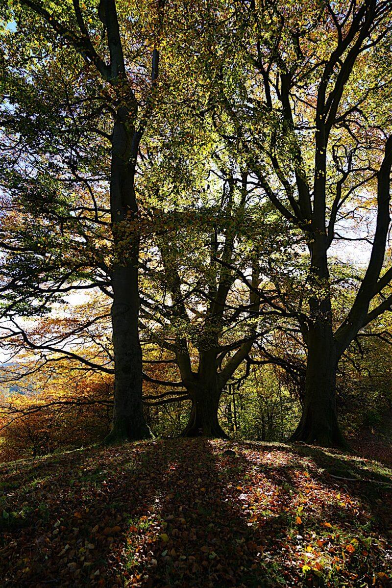 GRASMERE - Bill Birketts Lakeland Walks