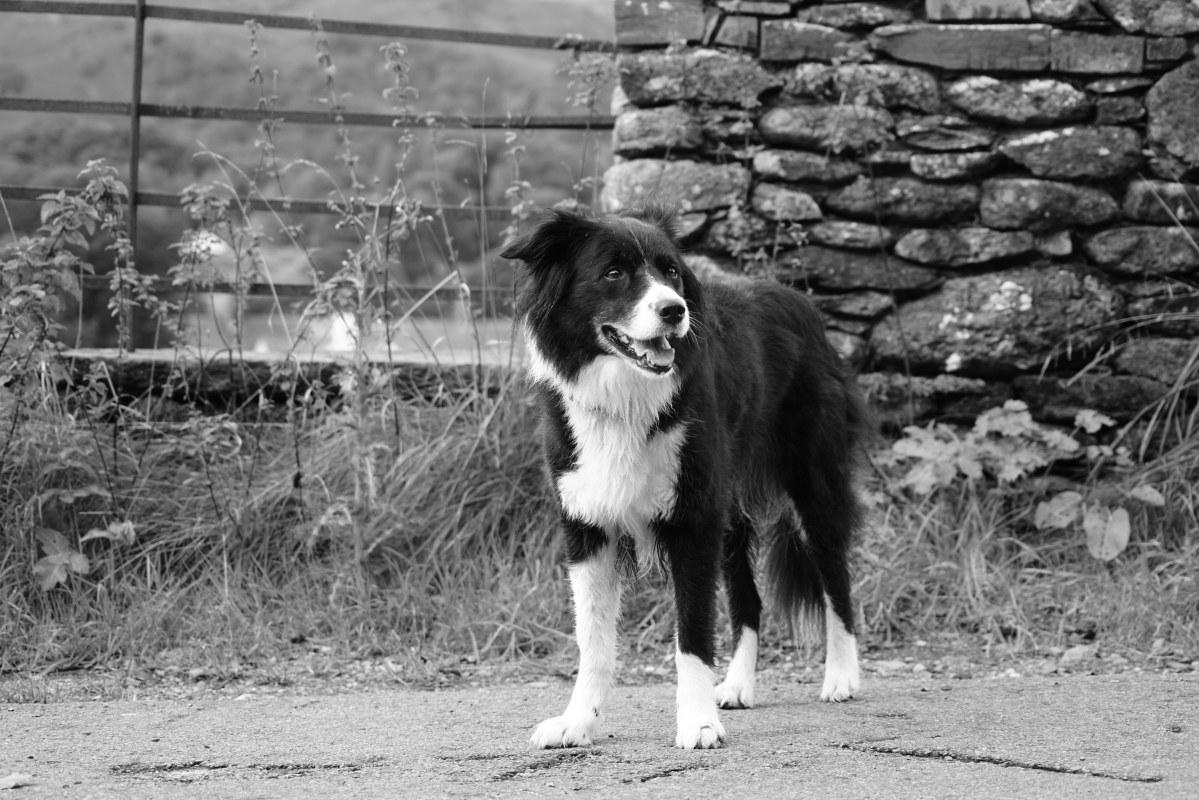 Jet - Bill Birketts Dog R.I.P