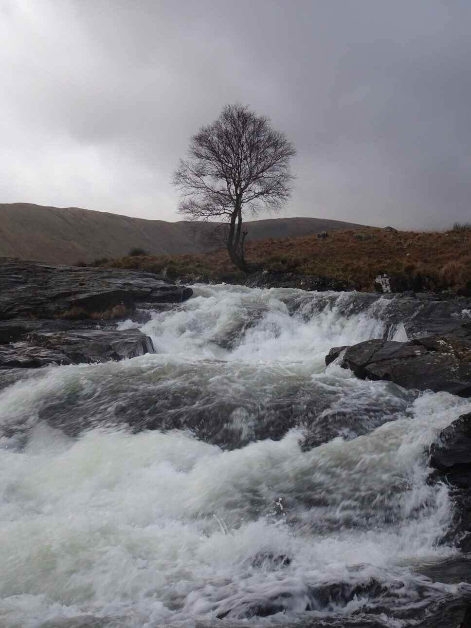 A rowan stands above the rock slides, downstream of Black Moss Pot in Langstrath.