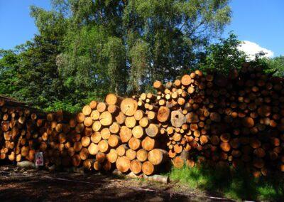 Fresh sawn logs stacked near Loughrigg Tarn. Taken at 17:13pm.